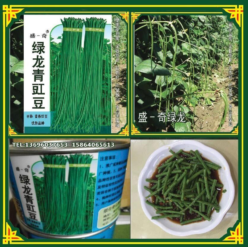 供应用于豇豆基地的青豇豆优势品种 盛-奇绿龙豇豆种子
