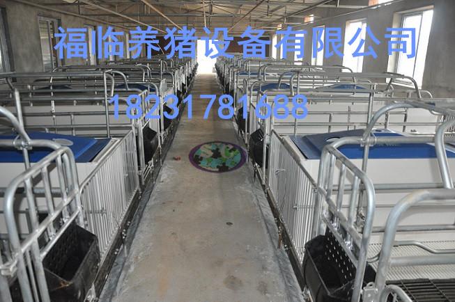 供应用于饲喂设备的【猪场养猪设备限位栏配件猪围栏】