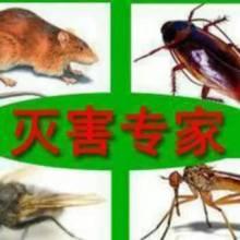 供应用于灭害的有害生物防治 杀虫专家 灭白蚁深圳有害生物防治