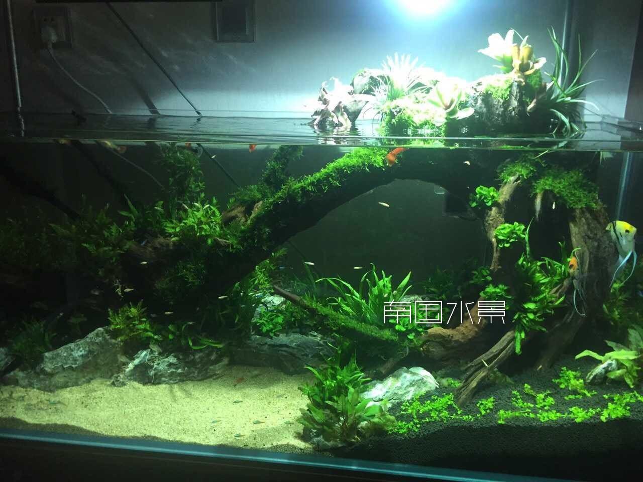 植物景观,生态鱼缸,水景设计施工报价