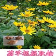菊粉  菊芋提取物 植物提取物 纯粉