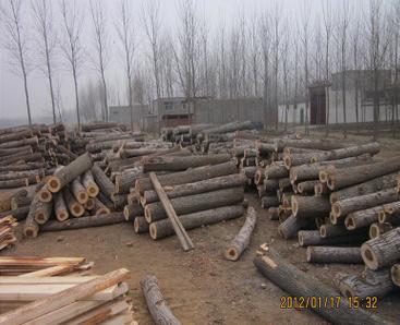 白椿木烘干板材哪家好 白椿木烘干板材厂家 白椿木烘干板材厂家销售 河南白椿木烘干板材厂家