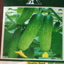 奇山压趴架黄瓜种子  适宜早春,晚秋大棚露地种植 盛琪蔬菜种子公司销售