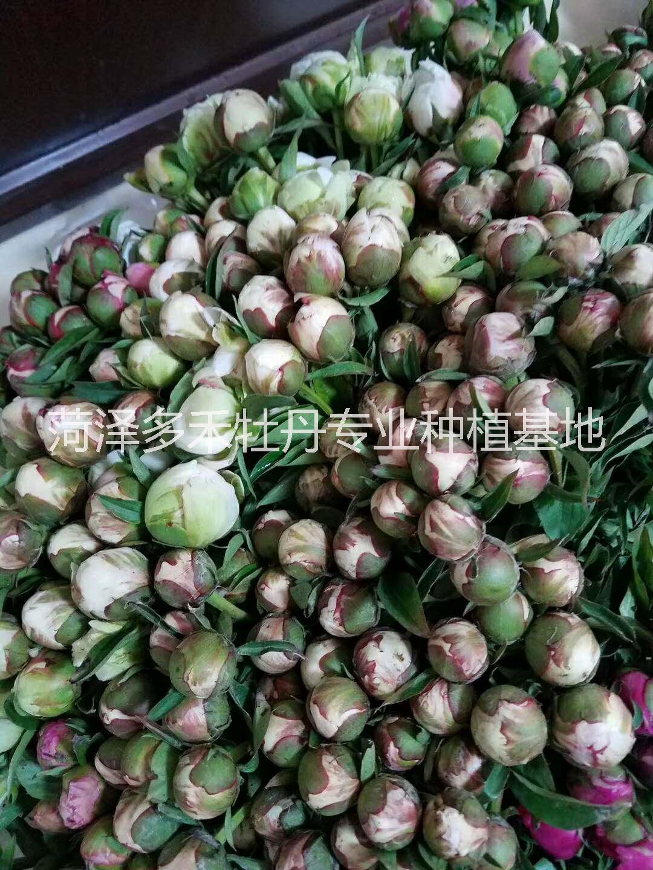 家庭宴用芍药鲜花 切花芍药销售