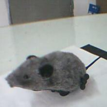 厂家直销猫咪玩伴逗猫互动玩具 宠物用品  宠物老鼠玩具