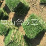 广州增城菲律宾草皮草卷批发价格
