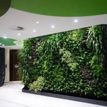 室内植物墙价格  室内植物墙哪家好 广东室内植物墙